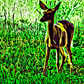 Valley Forge Deer by Alice Gipson