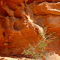 Valley Of Fire Rock Formation by Tracy Winter
