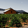 Valley Of The Moon Sonoma California 5d24485 V2 by Wingsdomain Art and Photography