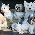 Van Doggies by Jill Brooks