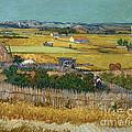 Van Gogh Wheatfield 1888 by Granger