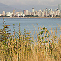 Vancouver Bc Downtown From Hasting Mills Park by Jit Lim