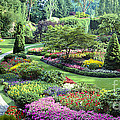 Vancouver Butchart Sunken Gardens Beautiful Flowers No People Panorama by David Zanzinger