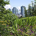 Vancouver Garden by Brenda Kean