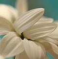 Vanilla Creme by Connie Handscomb