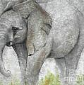 Vanishing Thunder Series-baby Elephant I by Suzanne Schaefer