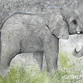 Vanishing Thunder Series-baby Elephant II  by Suzanne Schaefer