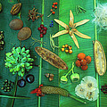Variety Of Seeds And Fruits by Christian Ziegler