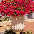 Vase Of Petunias by Zina Stromberg