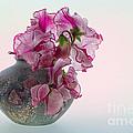 Vase Of Pretty Pink Sweet Peas 2 by Ann Garrett