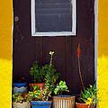 Vases On The Doorway by Carlos Caetano