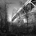 Vegetation Bridge by David DeCenzo