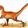 Velociraptor by Roger Hall