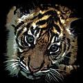 Velvet Tiger Cub by Athena Mckinzie