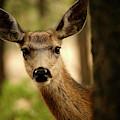 Venado Bura- Small Deer-bryce Canyon by David Santiago Garcia