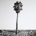 Venice Beach by Shaun Higson