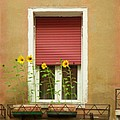 Venice Italy Yellow Flowers Red Shutter by Robyn Saunders