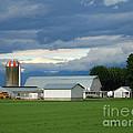 Verdant Farmland by Ann Horn