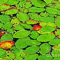 Verdant Swamp by Ann Horn