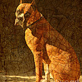 Vermeer's Dog by Judy Wood