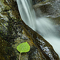 Vermont Aspen Leaf Waterfall Camels Hump Duxbury by Andy Gimino