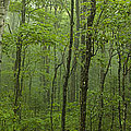Vermont Mount Mansfield Green Forest Fog Panorama by Andy Gimino