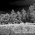 Vernon Lake Five by Ken Frischkorn