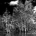 Vernon Lake Trip by Ken Frischkorn