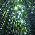 Vertical Bamboo Forest by Aaron Bedell
