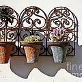 Vertical Cacti Garden by Kate McKenna
