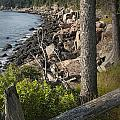 Vertical Photograph Of The Rocky Shore In Acadia National Park by Randall Nyhof