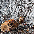 Very Old Logs by Tim Richards