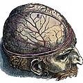 Vesalius: Cranium by Granger