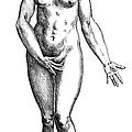 Vesalius: Female Nude by Granger
