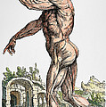 Vesalius: Muscles 02, 1543 by Granger