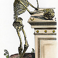 Vesalius: Skeleton, 1543 by Granger