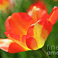 Vibrant Colorful Tulips by Linda Matlow