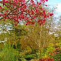 Vibrant Garden  by Ann Michelle Smith