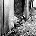 Victims Of The Gardelegen Massacre by Everett