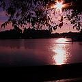 Victoria British Columbia Sunset by Barbara St Jean