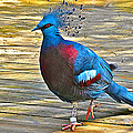 Victoria Crowned Pigeon In San Diego Zoo Safari In Escondido-california by Ruth Hager