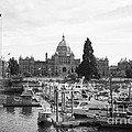 Victoria Harbour With Parliament Buildings - Black And White by Carol Groenen