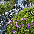 Vidae Falls And Flowers by Lee Kirchhevel