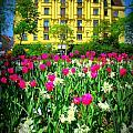 Vienna Residence by Monica Wyrick
