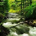 Viento Creek In June by Jeff Swan