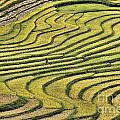 Vietnam Sapa Iv by Chuck Kuhn