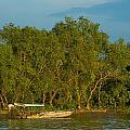 Vietnamese Fishing by Mark Llewellyn
