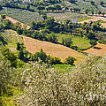 View At Montefalco by Bob Phillips