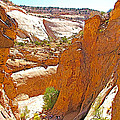 View From Above Capitol Gorge Pioneer Trail In Capitol Reef National Park-utah by Ruth Hager