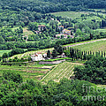 View From Castello Vicchiomaggio by Jennie Breeze